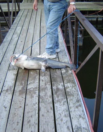 Catfish-9-21-07-001